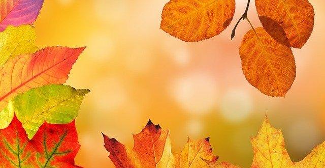 autumn ge75f7ea81 640