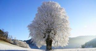 tree g9812a525f 640