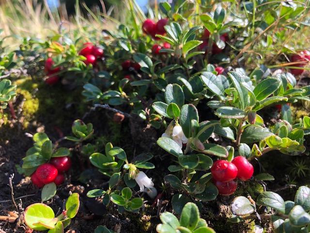 antioxidanti din fructe