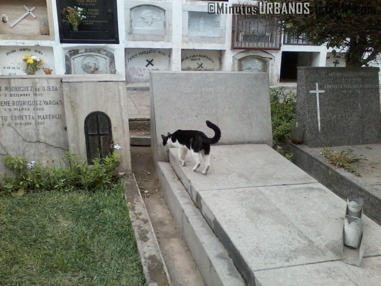 Uno de los gatos que acompañan a los guardianes del Cementerio.