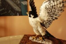 needle felting falcon