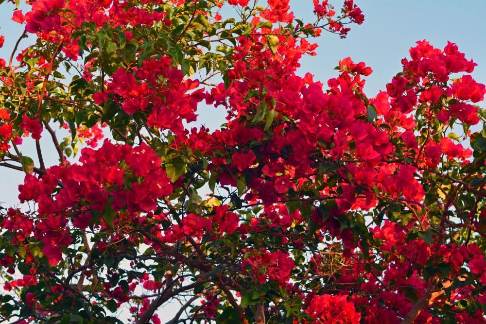 Welcoming Spring. (4/4)