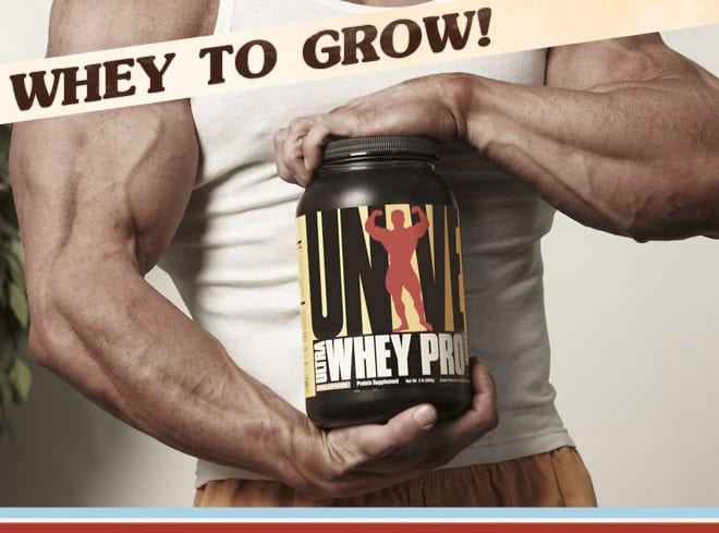 Universal Whey Protein ingredients