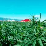 CBD And Steroids: The Two Booming Factors of the Current Health Industry