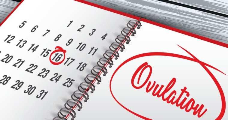 Track Ovulation With Ovulation Calendar