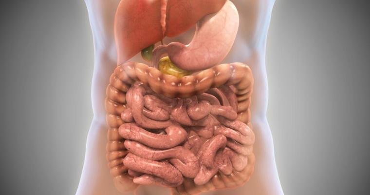 How to Clean Your Gut: 7 Effective Ways to Reduce Bad Gut Bacteria