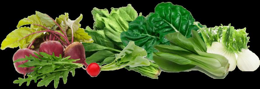 Verduras ricas en nitratos