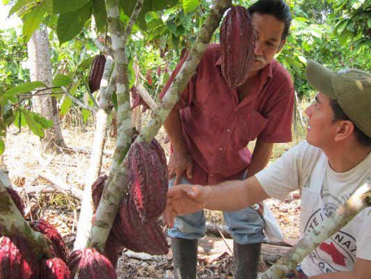 En Putumayo, el futuro sabe a cacao
