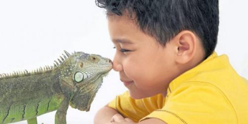 Por sus docilidad, este reptil se ha convertido en el mejor amigo de este niño.Foto ElTiempo