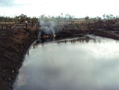 Estanque completamente contaminado y cantidad de cachamas muertas