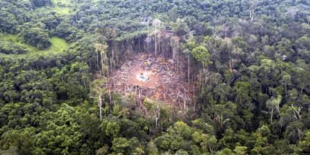 La deforestación en la Amazonía avanza sobre las 87 mil hectáreas de bosque.