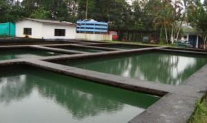 Acueducto de Puerto Asis - Foto : Wix.com