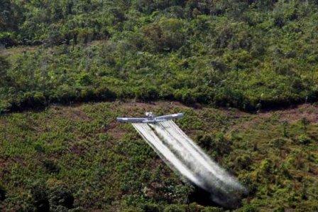 Los campesinos rechazan la fumigación de cultivos ilícitos porque afecta sus parcelas. / EFE
