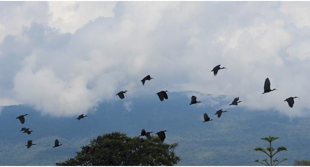 La voz del pueblo putumayense y la paz