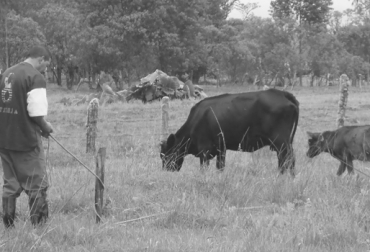 Los ganaderos del Putumayo manifiestan sentirse en otra Colombia, por cuenta del Estado. Foto: arapaimaregput.blogspot.com.
