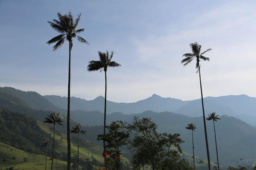 l Santuario de Fauna y Flora Otún Quimbaya fue incluido en los 100 destinos sostenibles del mundo para el 2016.