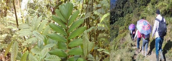 CORPOAMAZONIA e INVIAS avanza en el cumplimiento de las medidas de Compensación de reforestación por Proyecto Variante San Francisco-Mocoa