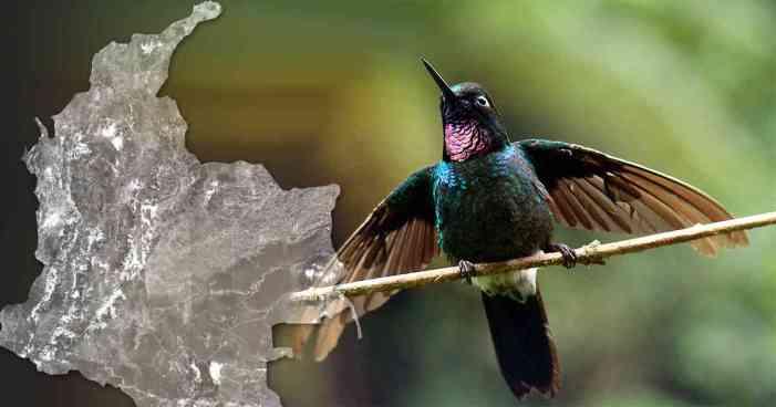 Colombia por el récord de avistamiento de aves en un solo día