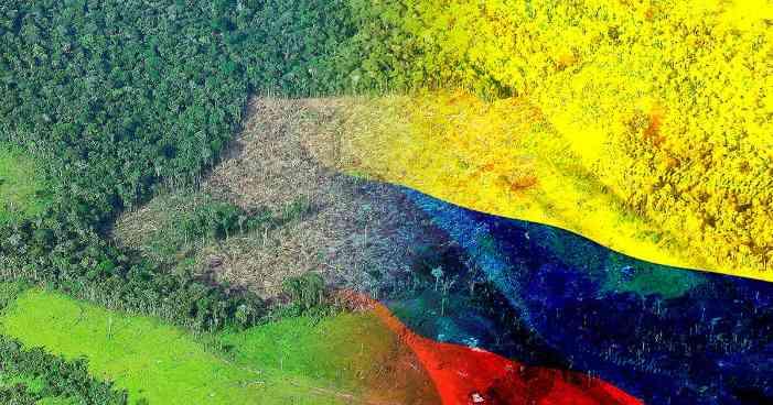 Cuatro historias del avance de la deforestación tras la salida de las Farc