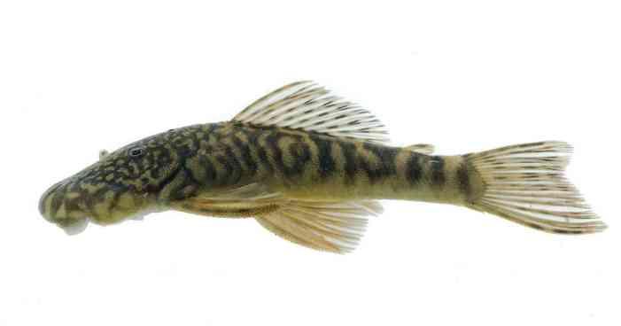 Colombia es el segundo país del mundo con mayor riqueza de peces de agua dulce