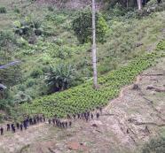 Putumayo y el Catatumbo reingresan al mapa de la erradicación