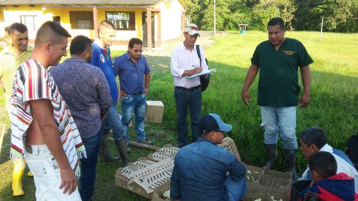 Gobernación entregó insumos pecuarios a familias de la vereda El Mesón de Mocoa