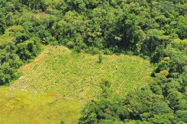 Una apuesta que reúne la paz y el medio ambiente en el Amazonas