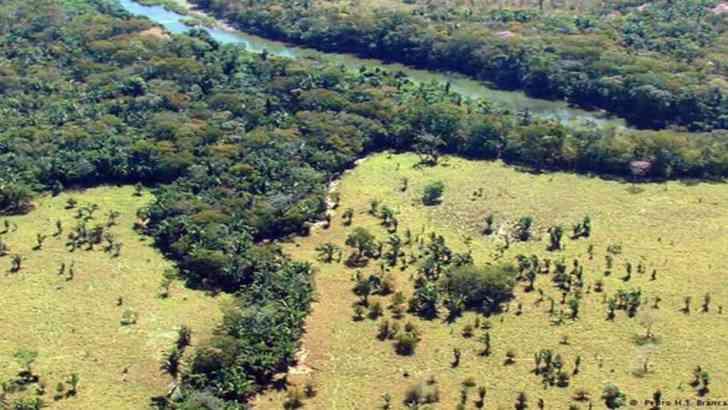 Casi 2 millones de hectáreas de suelo de la Amazonia, con daño irreversible por ganadería