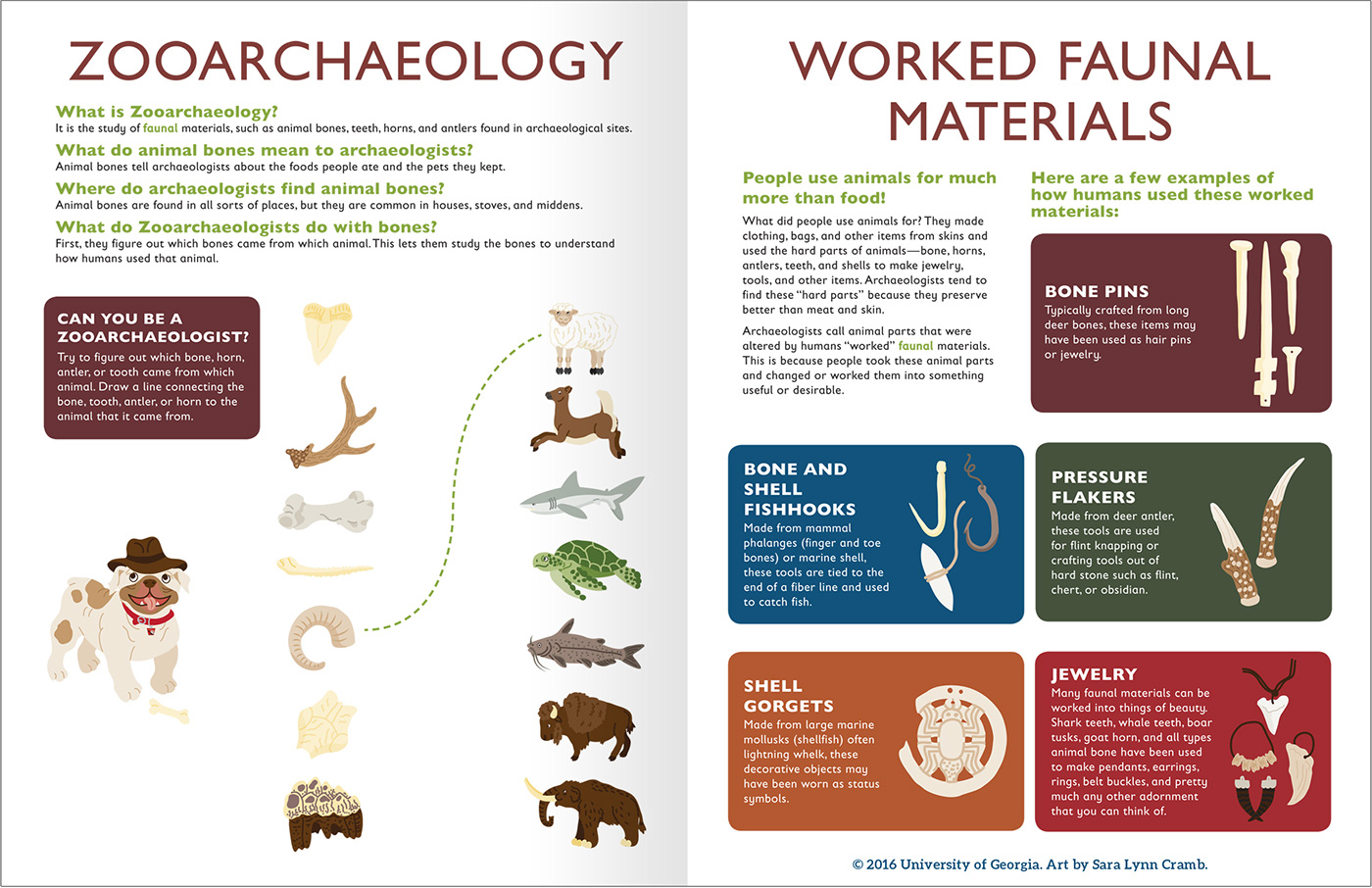 Uga Junior Archaeologist Workbook Illustration Design On