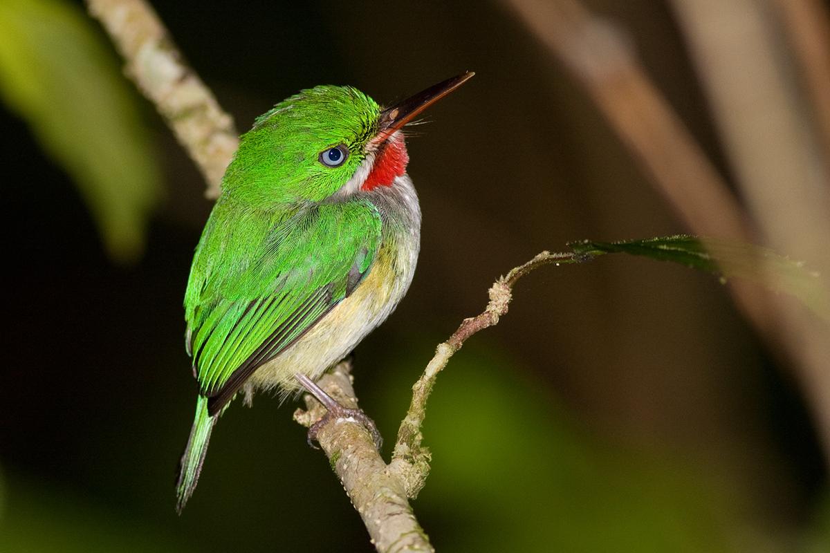 Endemic Birds Of Puerto Rico On Behance