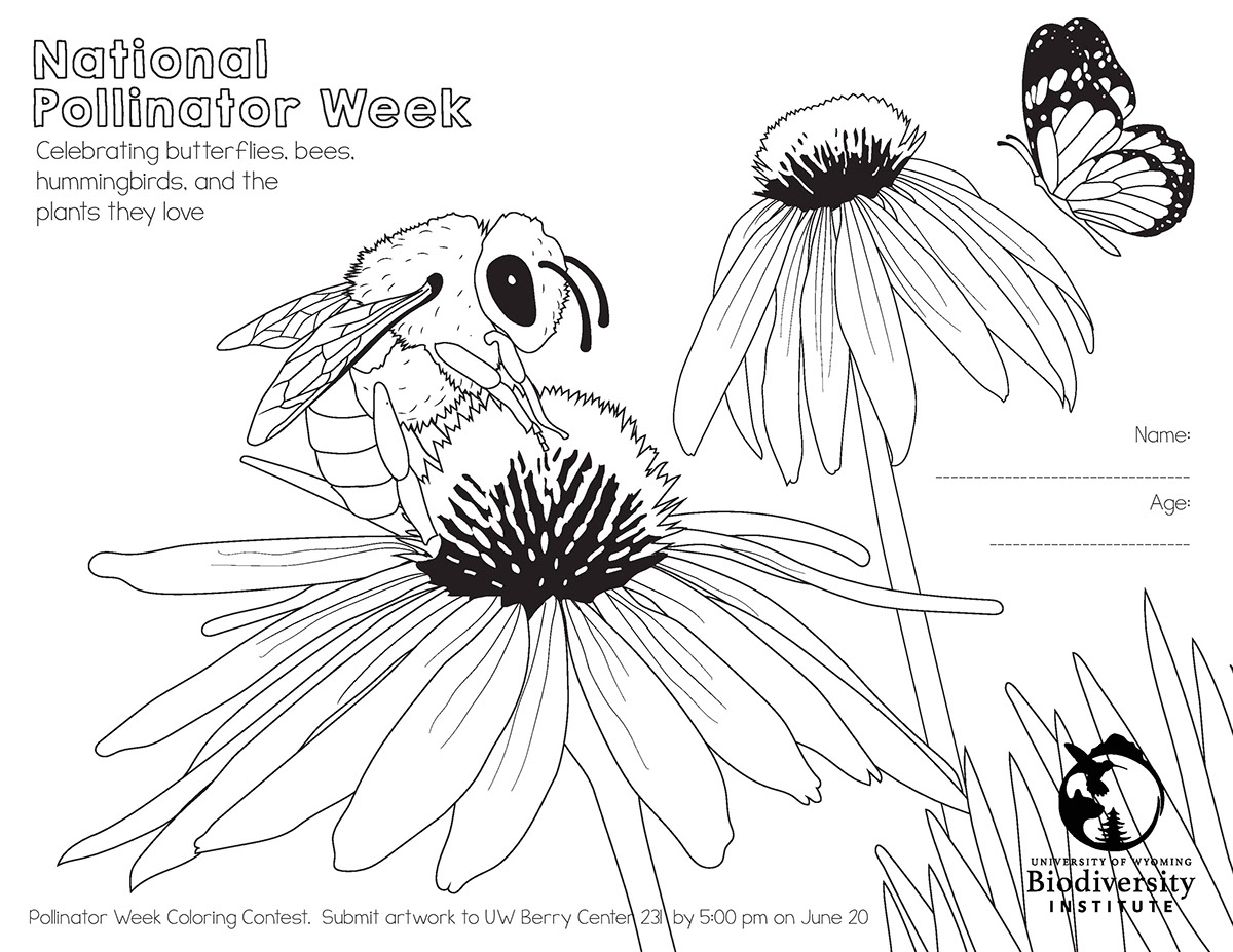 National Pollinator Week Coloring Pages On Behance