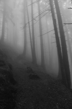 ..seltsam...im Nebel...