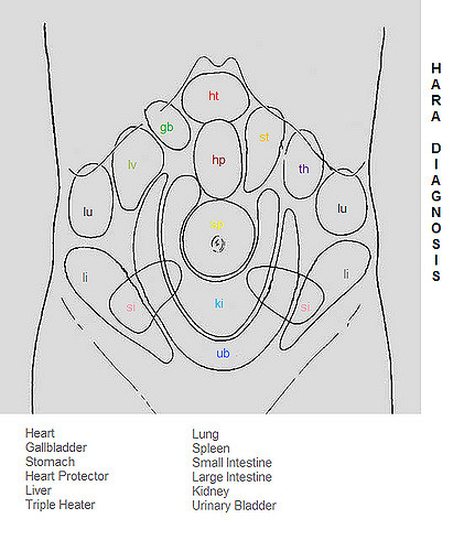 Chart of hara reflex areas