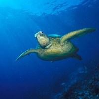 Turtles watching in Sri Lanka