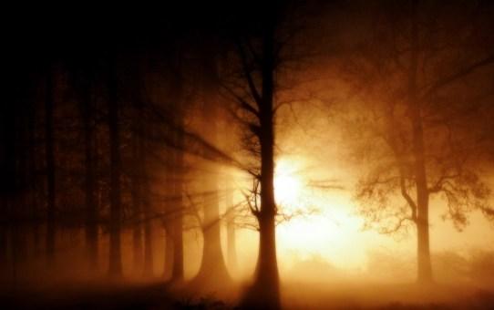 Nature-Sun-Shine-Behind-Trees-Wallpaper