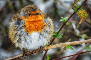 Round Robin extra