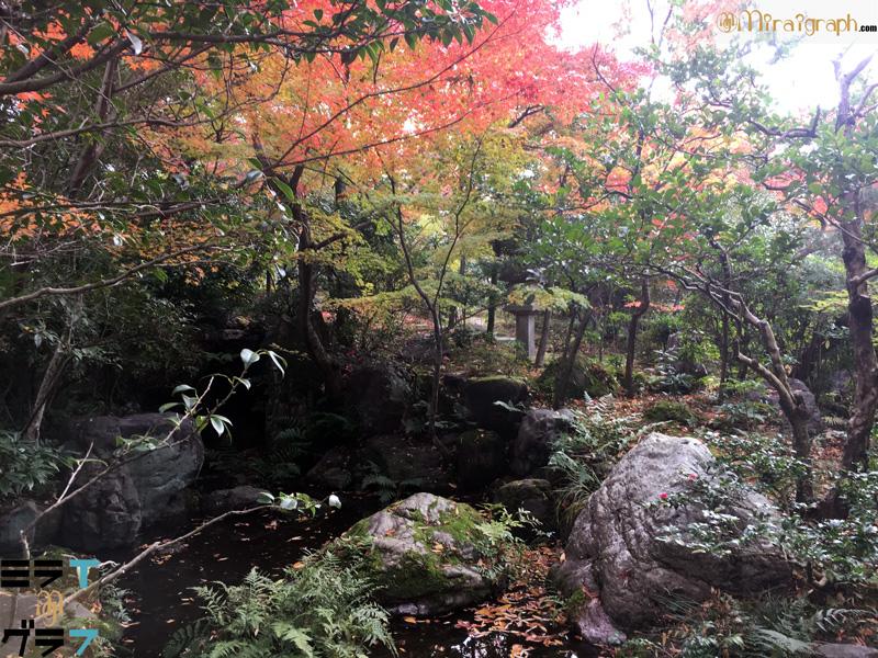 紅葉の公園のイメージ