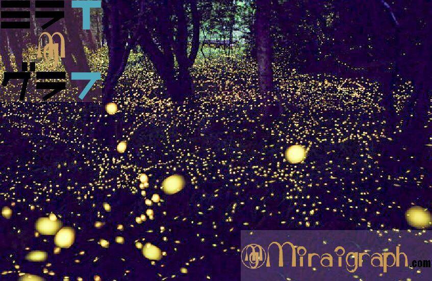 初夏の天然プラネタリウムのホタルを探る 6月5日の誕生花はホタルブクロ