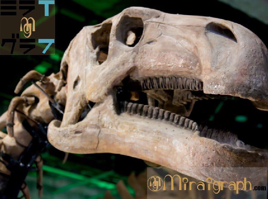 化石が出来るまでどれくらい!?恐竜の復活はありえるのか!?10月15日は化石の日『今日というミライグラフ365』