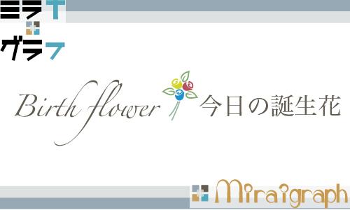 今日の誕生花は!? birthflower