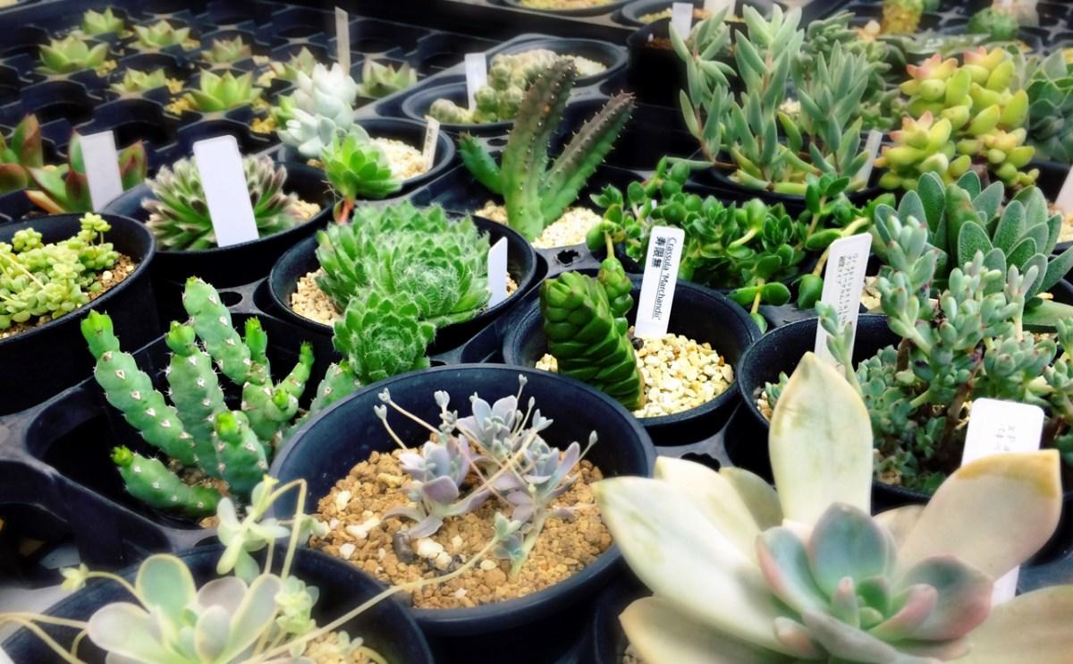 サボテン・多肉植物をはじめたい人必見!東京都内のオススメグリーンショップ5選