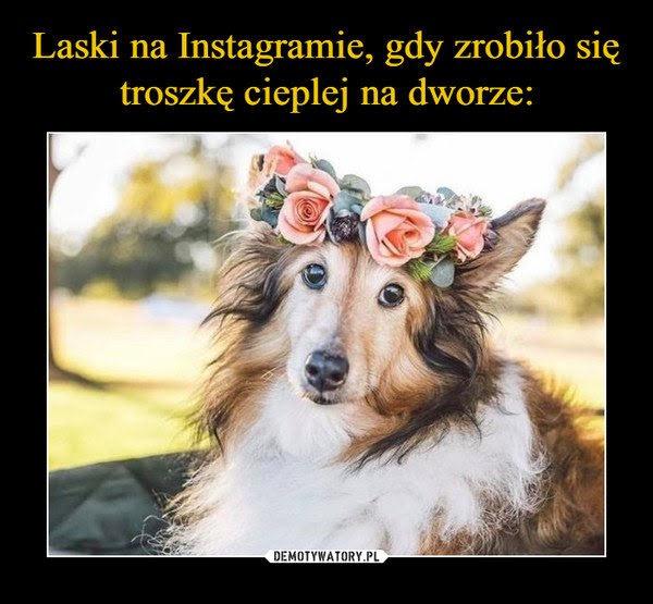 Lublin sukienka na wesele