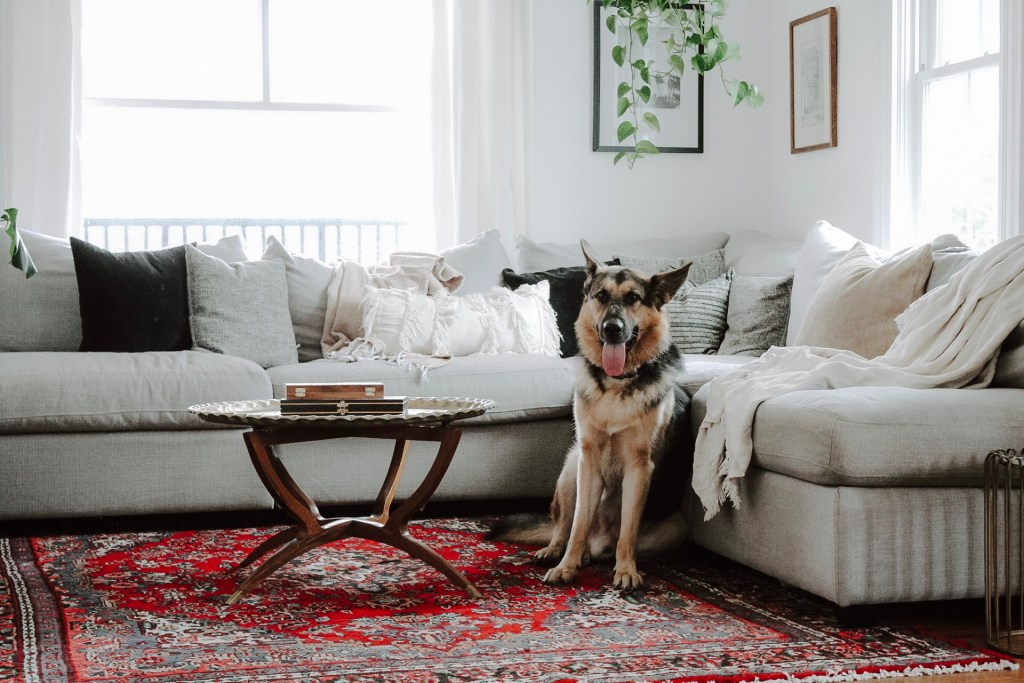 How to Keep Your House Clean when You Have Dogs that Shed | Miranda Schroeder Blog  www.mirandaschroeder.com