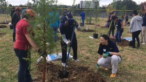 Planting Hundreds of Trees, Miraists Make a School a Better Place