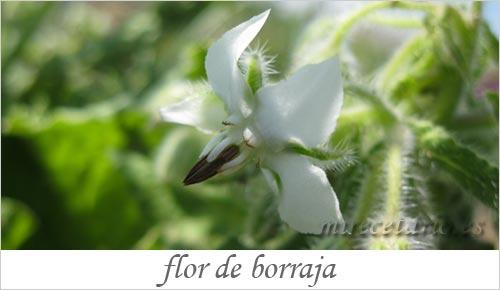 El huerto en flor