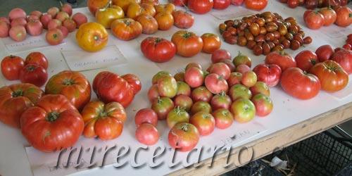 Al rico tomate