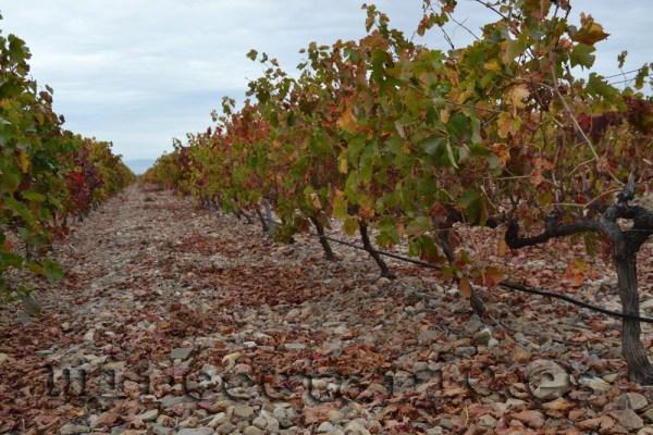 Las viñas de las piedras