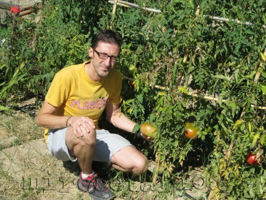 Los primeros tomates