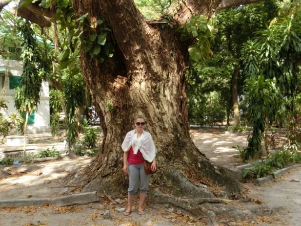 Im Stadtpark verzaubern große Bäume mit wunderschön ... (Foto: Balkanblogger)