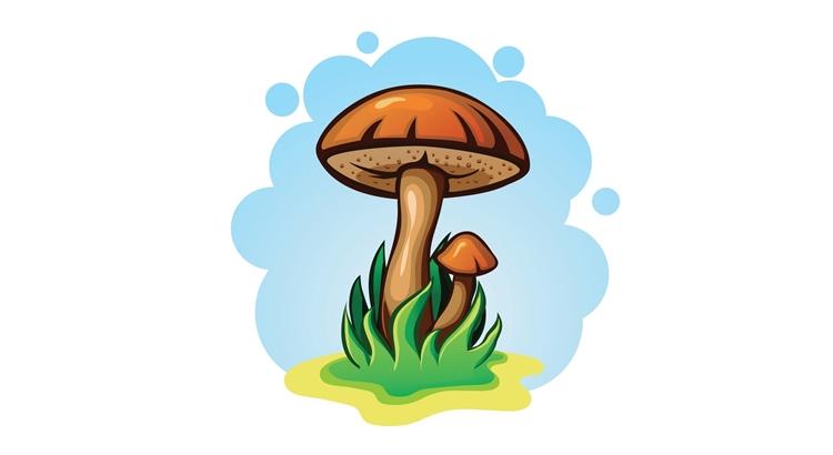 Заговор на грибы